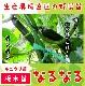 【てしまの苗】 キュウリ なるなる 断根接木苗 9cmポット 野菜苗 培土 種 堆肥 【人気】