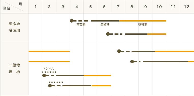 【てしまの苗】ケール苗 カリーノケールロッソ 9�ポット 葉菜苗  【人気】