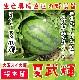 【てしまの苗】  大玉スイカ 夏武輝 断根接木苗 9cmポット 野菜苗 培土 種 堆肥 【人気】