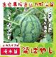 【てしまの苗】 大玉スイカ 祭ばやし777 断根接木苗 9cmポット 野菜苗 培土 種 堆肥 【人気】
