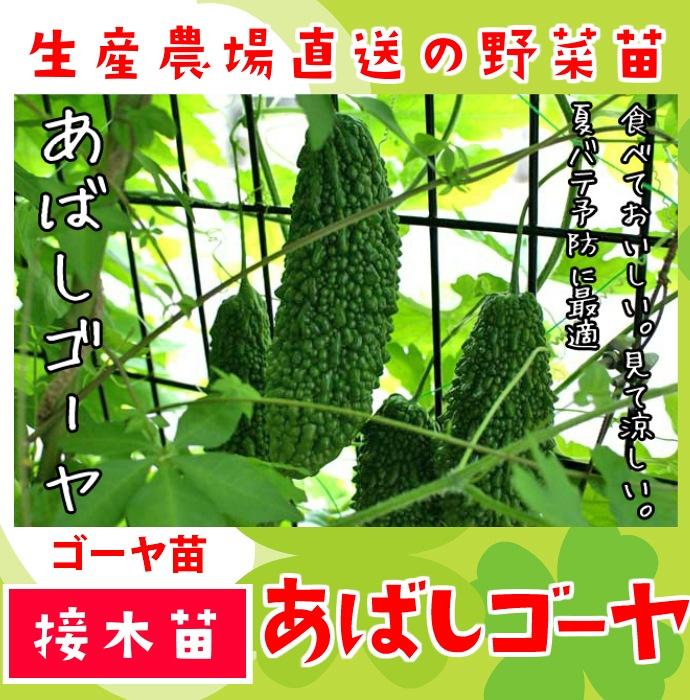 【てしまの苗】 ゴーヤ あばしゴーヤ 断根接木苗 9cmポット 野菜苗 培土 種 堆肥 【人気】