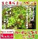 【てしまの苗】 ベビーリーフ苗 ガーデンレタスミックス  9cmポット 野菜苗 培土 種 堆肥 【人気】 葉菜苗 【人気】