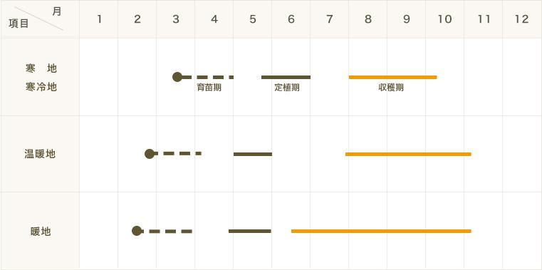 【てしまの苗】 トウガラシ苗 タカノツメ 実生苗 9�ポット
