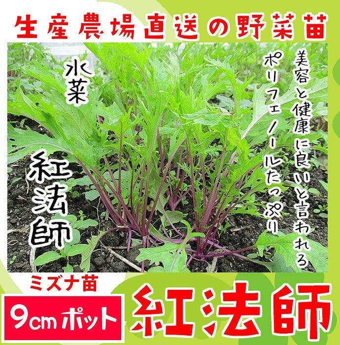 【てしまの苗】 ミズナ苗 紅法師 9cmポット 野菜苗 培土 種 堆肥 【人気】 葉菜苗 【人気】