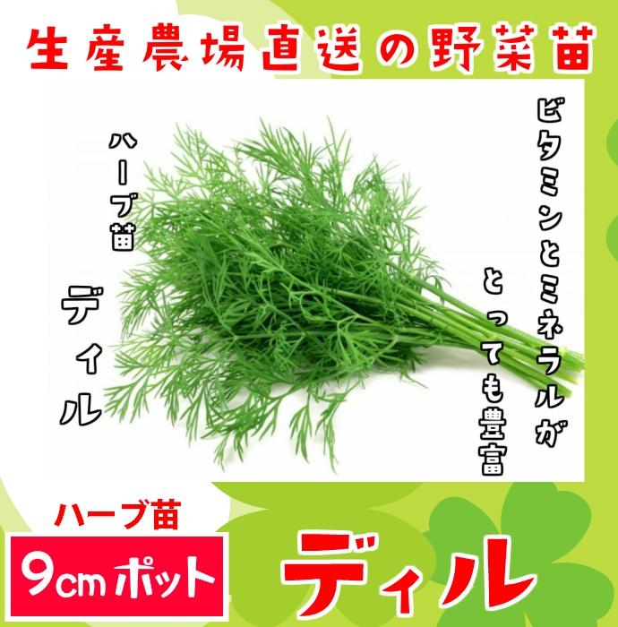 【てしまの苗】ハーブ苗 ディル 実生苗 9cmポット 野菜苗 培土 種 堆肥 【人気】