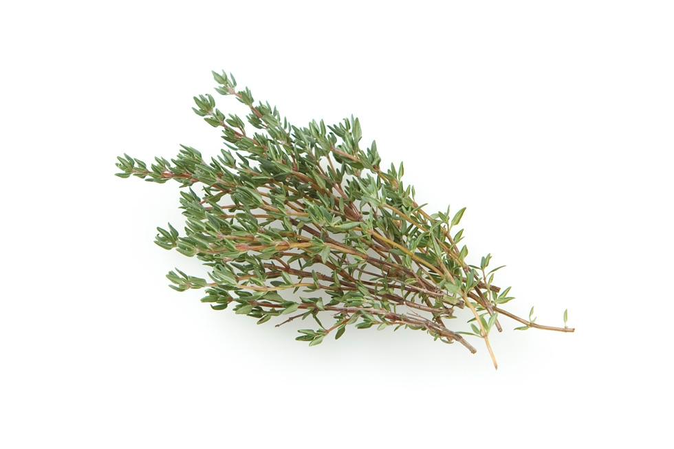 【てしまの苗】ハーブ苗 タイム 実生苗 9cmポット 野菜苗 培土 種 堆肥 【人気】