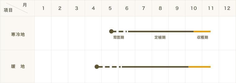 【てしまの苗】 ラッカセイ苗 半立性大粒落花生  実生苗 9�ポット