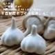 野菜苗 青森県産ホワイト6片にんにく3芽植え 9cmポット 10月中下旬より順次発送