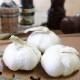 野菜苗 にんにく3芽植え 9cmポット 10月中下旬より順次発送