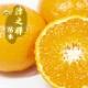 予約商品 送料無料 みかん 苗木 津之輝 接木 柑橘苗 15cmポット 9月中下旬より順次発送