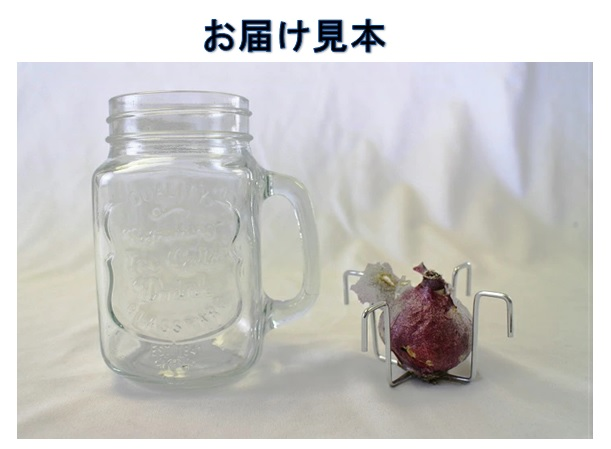 【予約商品】ヒヤシンス水栽培セット ドリンキングジャー仕様 しろ 白色 ホワイト 水耕栽培キット 10月中下旬より順次発送
