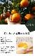 送料無料 みかん 登録品種 苗木 はるみ 接木 柑橘苗 15cmポット
