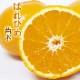送料無料 みかん 登録品種 苗木 はれひめ 接木 柑橘苗 15cmポット