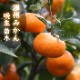 送料無料 みかん 苗木 温州みかん 晩生 接木 柑橘苗 15cmポット