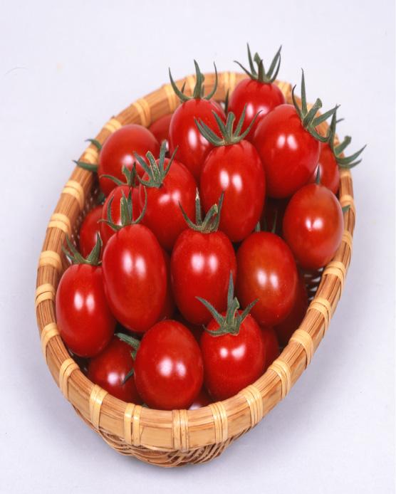 送料無料 接木野菜苗 3個セット 甘っこ ミニトマト 9cmポット苗