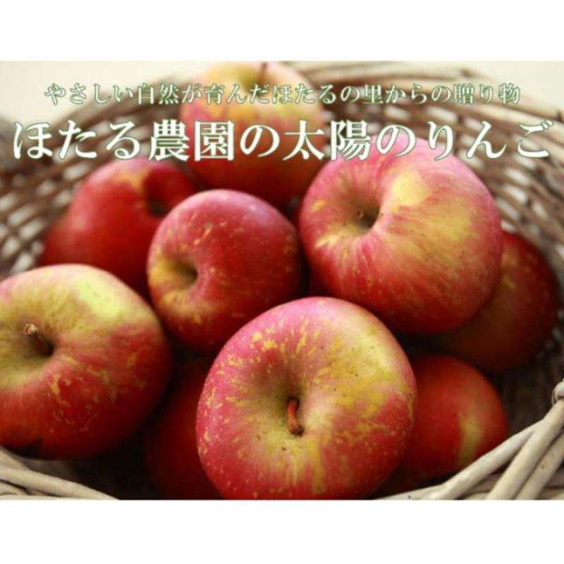 【予約11月下旬配送】太陽のりんご 【5kg】 送料込
