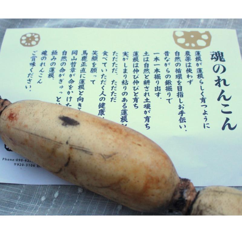 自然栽培のれんこん 【1kg/2kg】