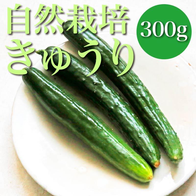 【みずみずしい♪】自然栽培きゅうり 300g