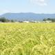 【わけあり・お得!】 2019年産 自然栽培ササニシキ  5 kg 白米/玄米