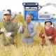石山さんの自然栽培ササニシキ 白米 5kg / 2kg