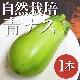 【トロッとした食感♪】田神さんの自然栽培青ナス 1本