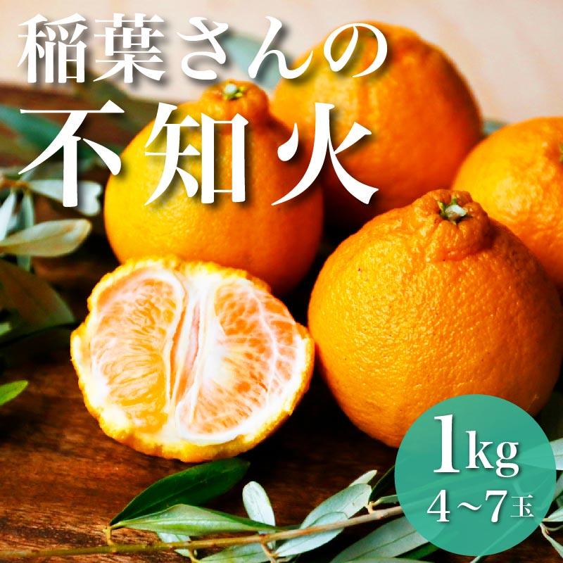 稲葉さんの自然栽培不知火 1kg