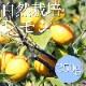 【少量使いたい方に】自然栽培レモン 350g