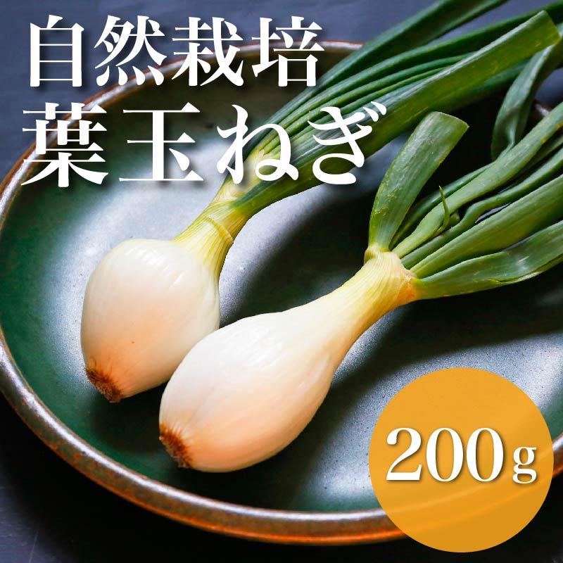 【火を通すとトロッと甘い!】自然栽培葉玉ねぎ 200g