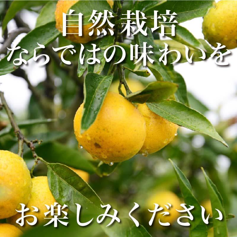 【すっきり心地よい味わい♪】自然栽培 みかん 1kg