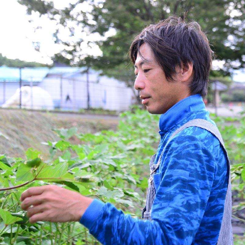 自然栽培 ジャンボいんげん 100g