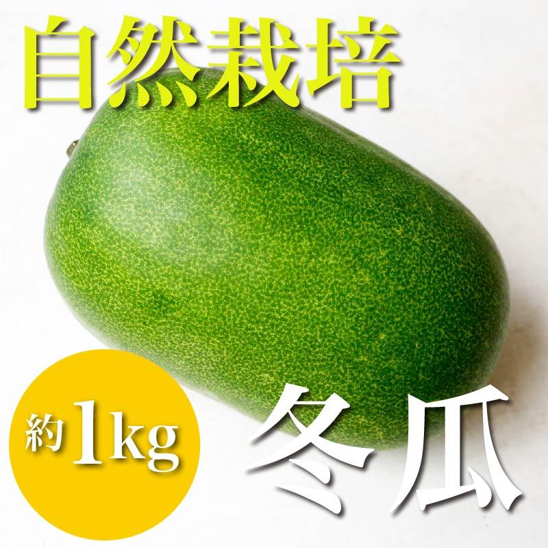 自然栽培冬瓜 約1kg