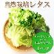 自然栽培レタス(リーフレタスまたはサニーレタス) 1袋