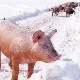 北海道放牧豚 ポークウインナー 100g