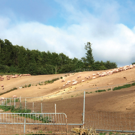 北海道放牧豚 モモハム 180g