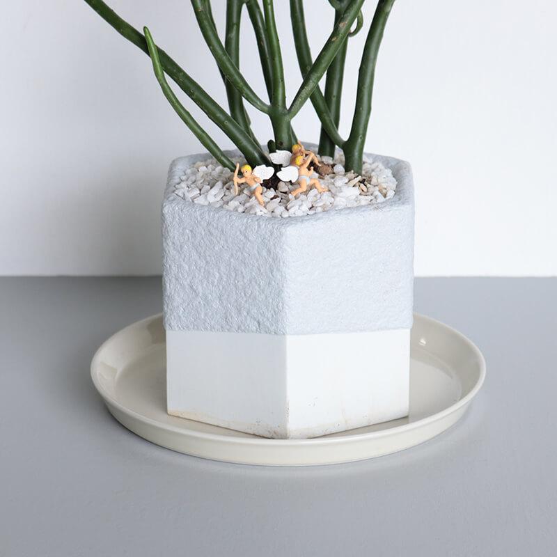 magonia 植木鉢 ミディアム