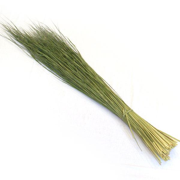 【稲わら】新潟産 稲わら(青刈り)