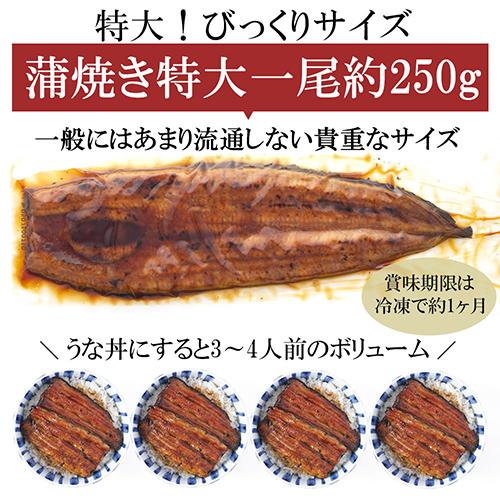 特大 鹿児島産うなぎ 蒲焼2尾(たれ・山椒付)