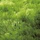 GRASS RUG 140x200� グラスラグ