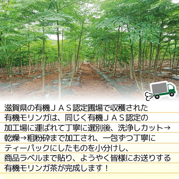 滋賀県産 有機モリンガ茶 2g×30包 オーガニック 国産