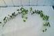 シュガーバインガーランド 90センチ E4461 造花  アーティフィシャルフラワー