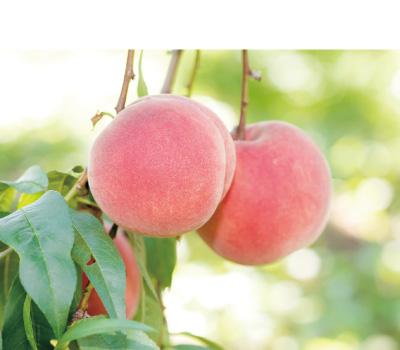 桃果のしずく 8個入