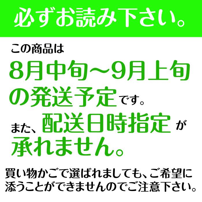 北海道産 ホワイトコーン L〜2Lサイズ 10本【8月中旬〜9月上旬発送】