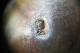 フランスロココ様式 シルバー925ソルト&ペッパーカップ 4264