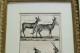 フランス オールドプリント[自然界百科体系図説」 (銅版画)フレーム 0815_05