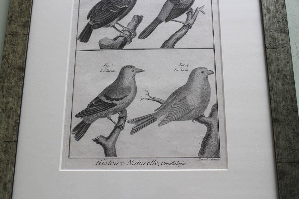 フランス オールドプリント[自然界百科体系図説」 (銅版画)フレーム 0815_01
