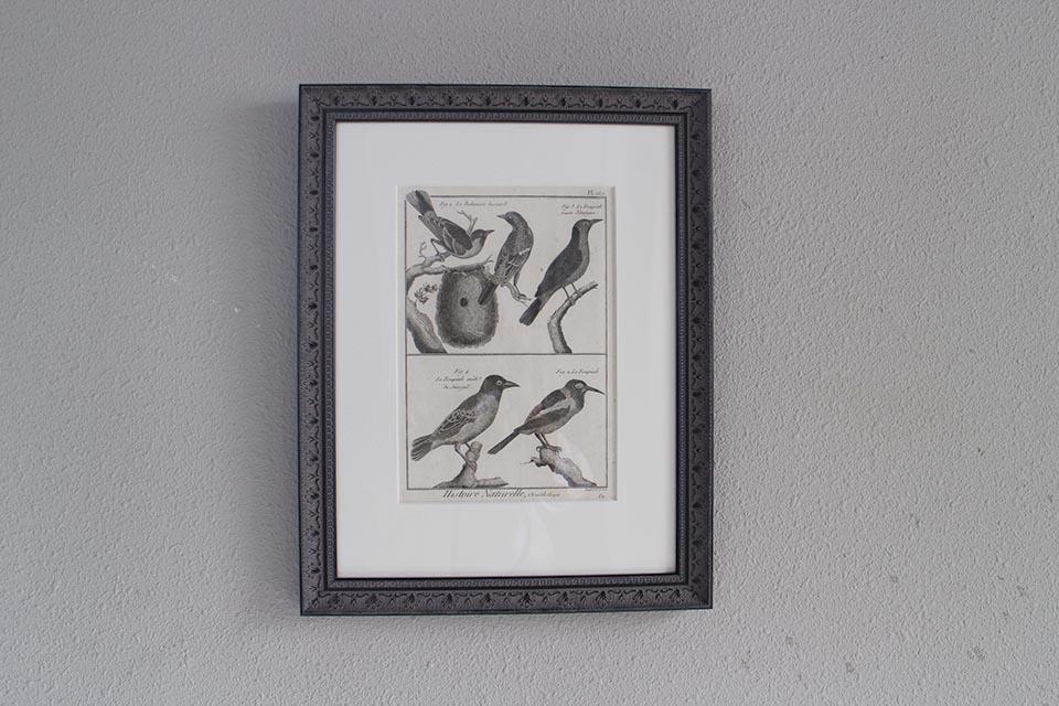 フランス オールドプリント[自然界百科体系図説」 (銅版画)フレーム 0815_04