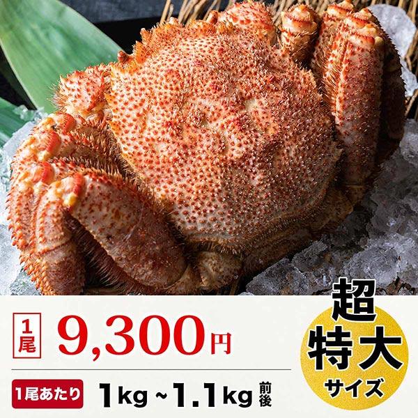 【北海道産】毛ガニ 超特大サイズ 1尾 (1尾あたり 1kgから1.1g前後)[ボイル冷凍]