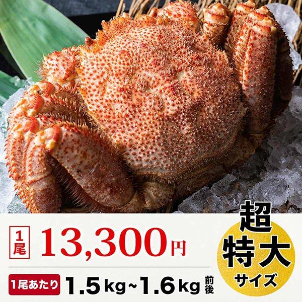 毛ガニ 超特大サイズ 1尾 (1尾 1.5kgから1.6kg前後)[ボイル冷凍]