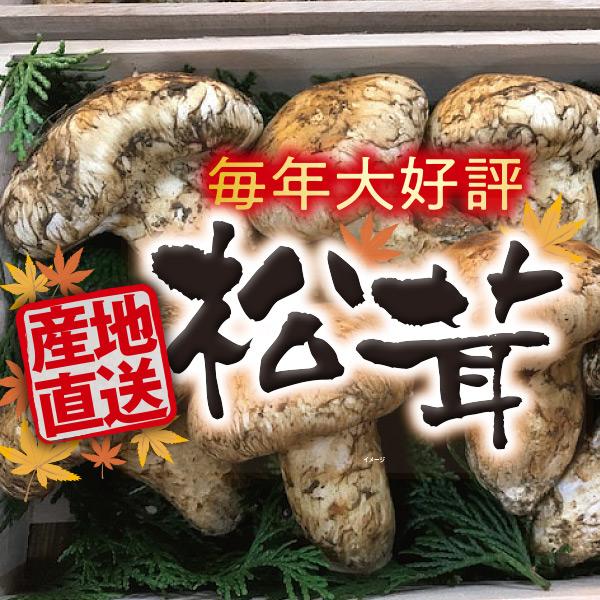 2020年 オリジナル【季節・期間限定】ホップス トルコ産 松茸 グレード1 ★送料込★
