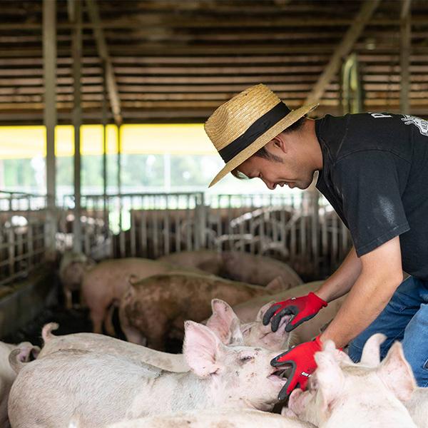 鉾田の名産品をふんだん使った カレーセット メロン 200g ・さつまいも 200g・地養豚 220g